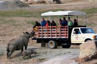 San Diego Zoo Safari Park rhinos