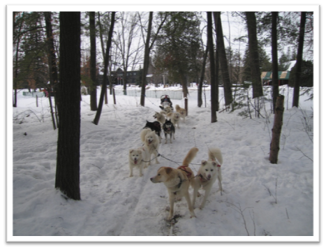 Dog-sledding in Quebec