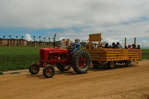 Carlsbad Flower Fields wagon ride