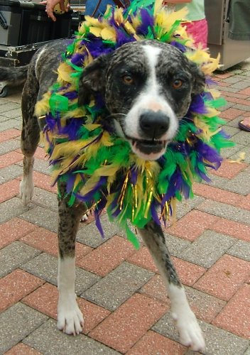 Mardi Gras Krewe of Barkus and Meoux Mardi Paws Parade in Shreveport-Bossier, Louisiana