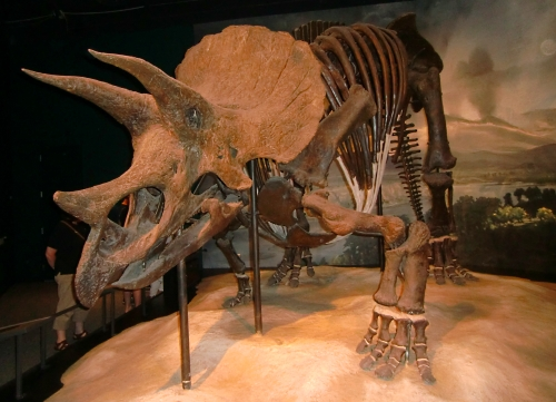 Triceratops at Science Museum of Minnesota