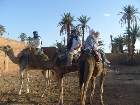 Travel and Travails on Camels in Sahara Desert