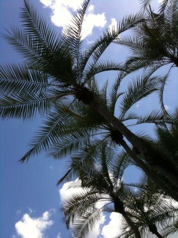 Orlando trees and sunshine
