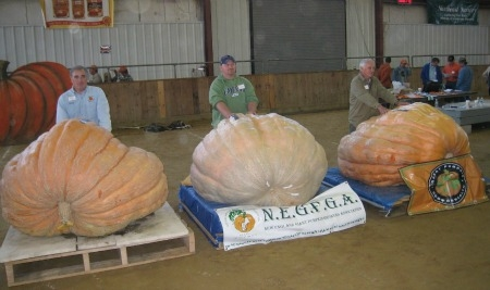 Pumpkin weigh-off Topsfield