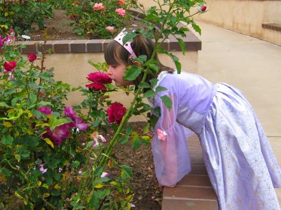Balboa Park Rose Garden in San Diego