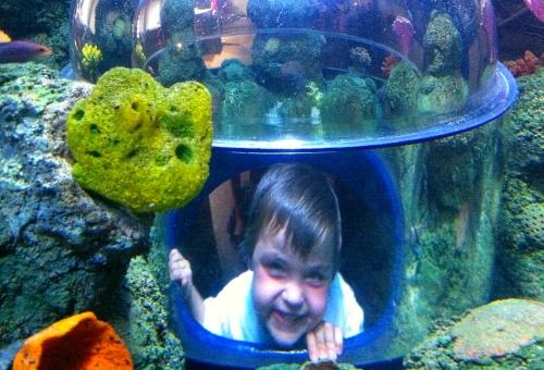Legoland Sea Life Aquarium - Carlsbad