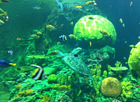 SeaWorld Turtle Bay