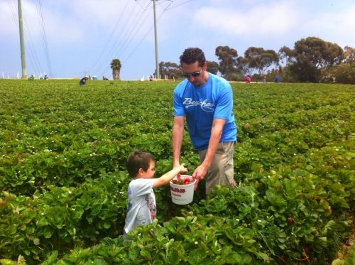 Picking strawberries near San Diego