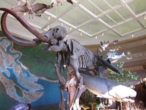 Mammoth Bones at Falls of the Ohio State Park Interpretive Center