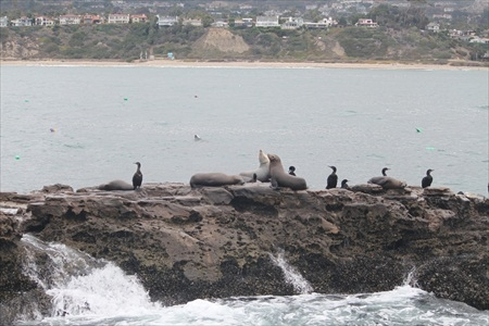 Seal Rock near San Clemente - Dolphin Watching