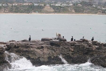Seal Rock near San Clemente