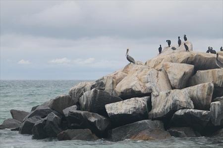 Dana Wharf birds