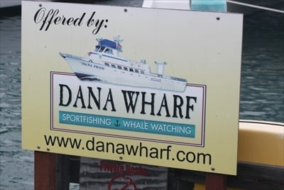 Dana Wharf Sportfishing and Whale Watching - Dolophin Watching