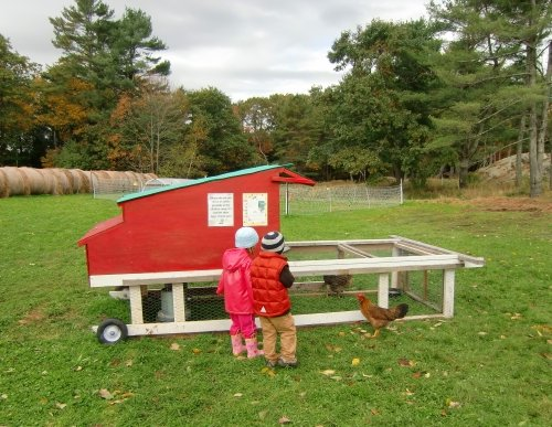 Children and chickens at Wolfe's Neck Farm in Freeport, Maine