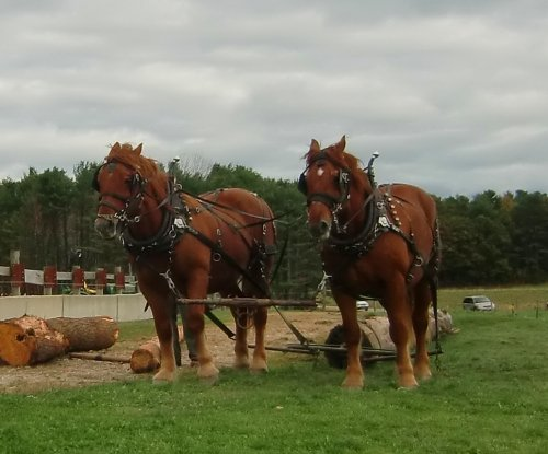 Horses at Wolfe's Neck Farm in Freeport, Maine