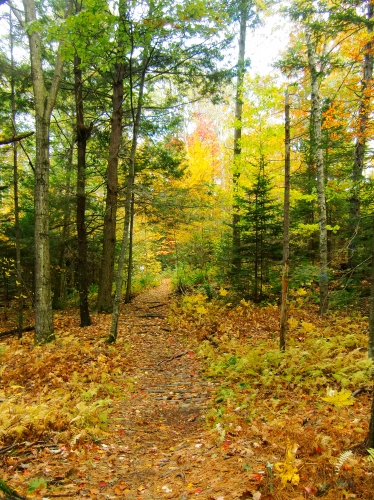 Fall foliage at Wolfe's Neck Farm in Freeport, Maine