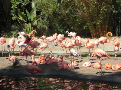 The flamingos and ducks are favorites for the zoo's youngest visitors