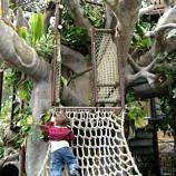 Leo climbing Toni's Tree House