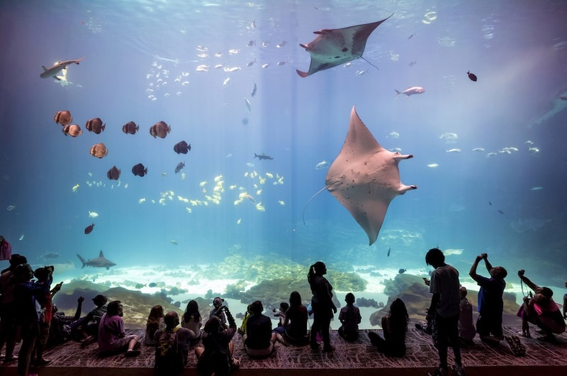 Learn with your kids at the Georgia Aquarium in Atlanta