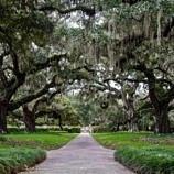 South Carolina Spanish Moss trees- Haunted Walking Tours in South Carolin and Georgia