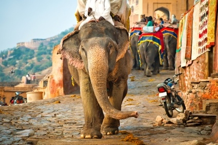 Elephant at the Amber Palace in Jaipur, India