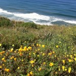 Del Mar Romantic Getaway
