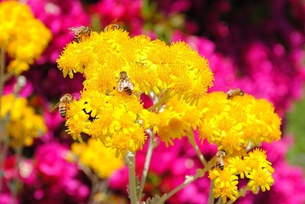 Bees and flowers at Mission San Juan Capistrano