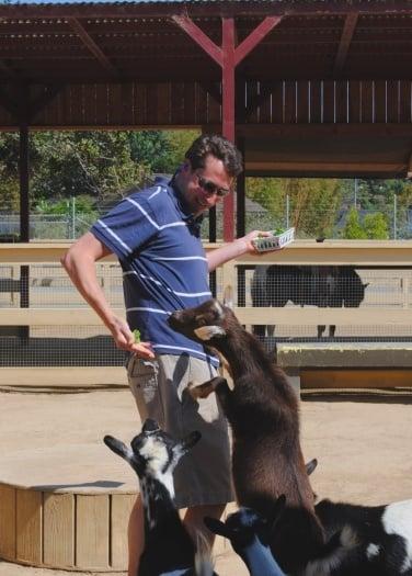 Zoomars petting zoo goats