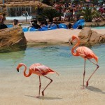 Why to Visit Aquatica – SeaWorld San Diego's Water Park