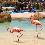 Flamingos at SeaWorld's Aquatica in San Diego