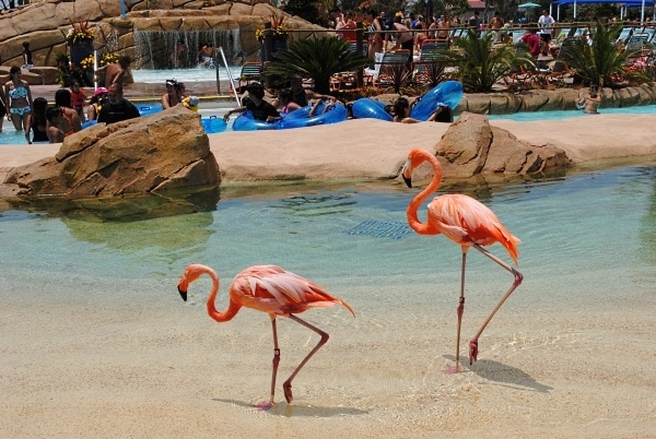Flamingos at SeaWorld's Aquatica in San Diego