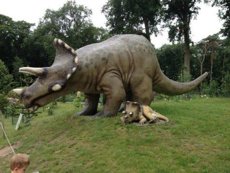 Life size triceratops at De Groene Poort