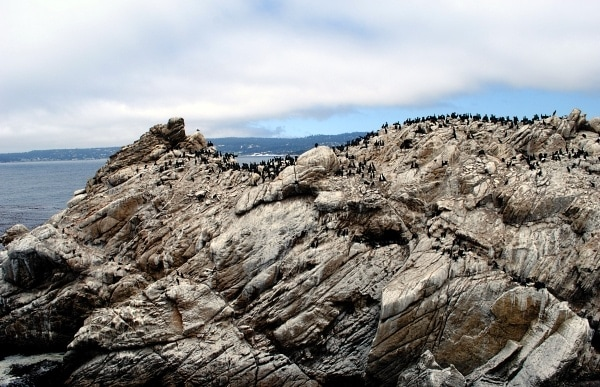 Birds at Point Lobos State Reserve