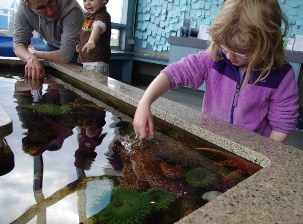 Touch tank at Shaw Ocean Discovery Center