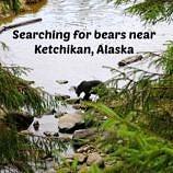 Searching for bears near Ketchikan, Alaska