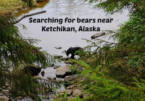 Searching for bears near Ketchikan, Alaska