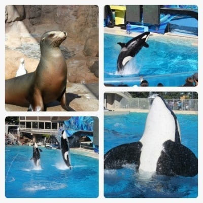 SeaWorld San Diego's animal attractions aplenty