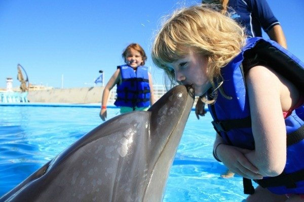 Swimming with dolphins in Los Cabos, Mexico