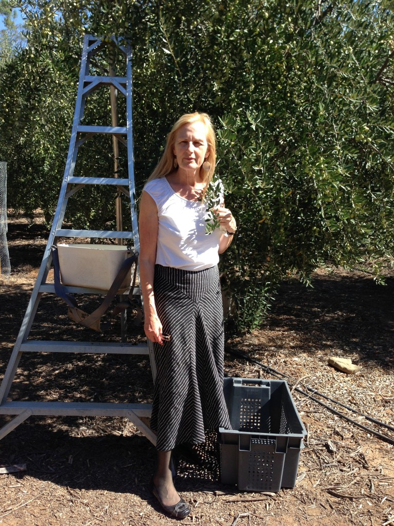 Learning how olives become oil at Ojai Olive Oil Company