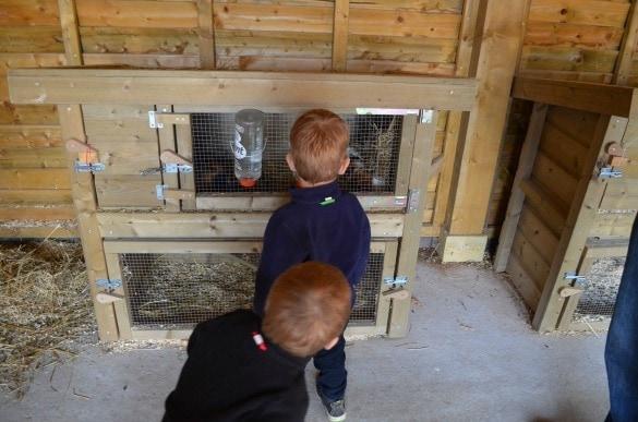 Petting zoo at Center Parc Bostalsee