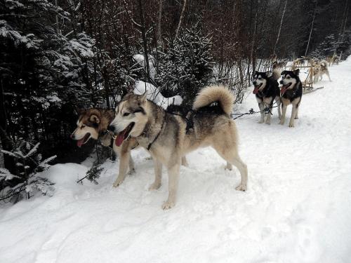 Dog-sledding in Quebec's Outaouais