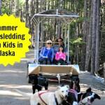 Summer Dog-sledding in Skagway, Alaska with Kids
