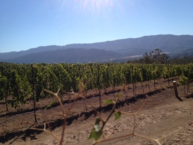 Vineyard view from the trail in Ojai