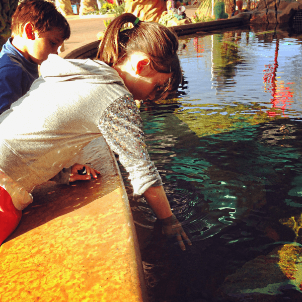 Get your hands wet and pet sea creatures in the Explorer's Reef touch pools