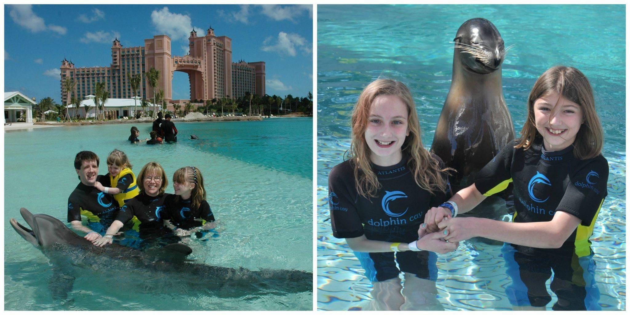 Bahamas Atlantis Dolphin Cay dolphin and sea lion interactions