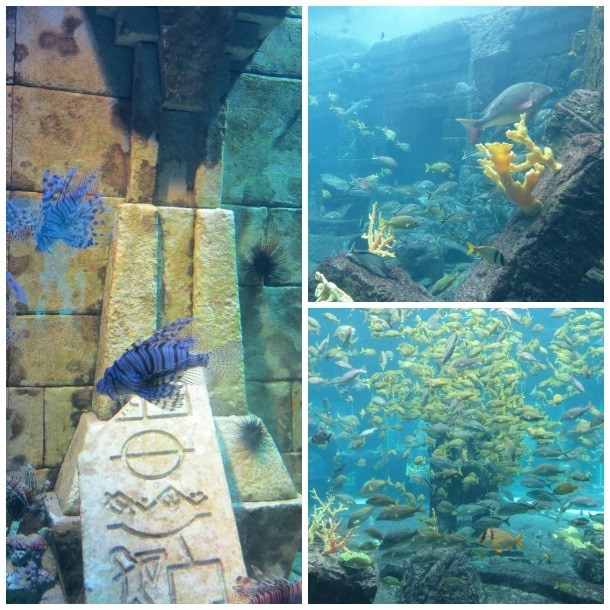 Bahamas Atlantis The Dig