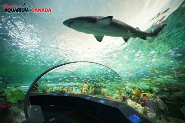 Toronto Ripley's Aquarium of Canada Dangerous Lagoon shark