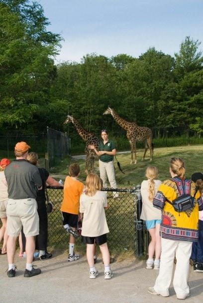 Toronto Zoo African Savanna giraffes