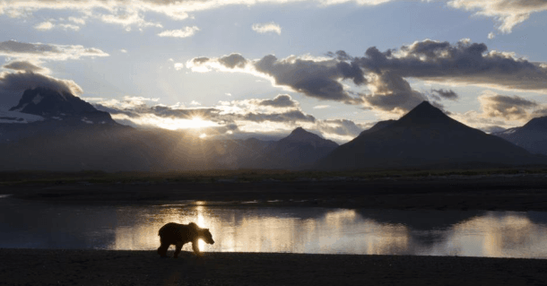 Disneynature is donating a portion of opening-week ticket sales for Bears to the National Park Foundation