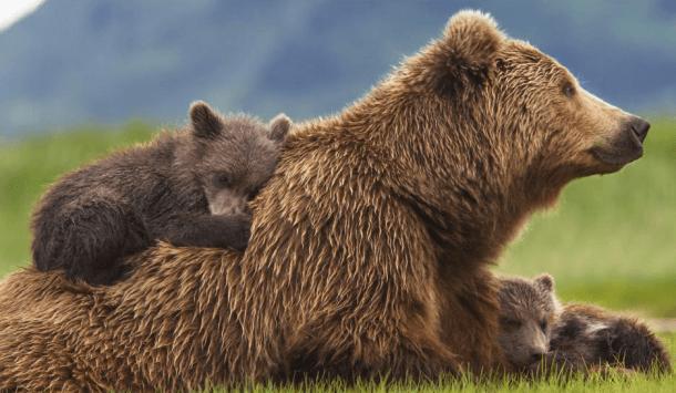Disney Bears Movie